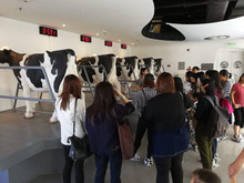 China Mengniu Dairy Co Ltd Media Visit