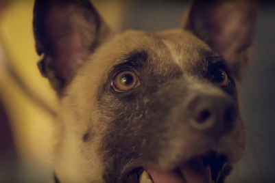 Moving video shows that shelter dogs are worthy of love, too