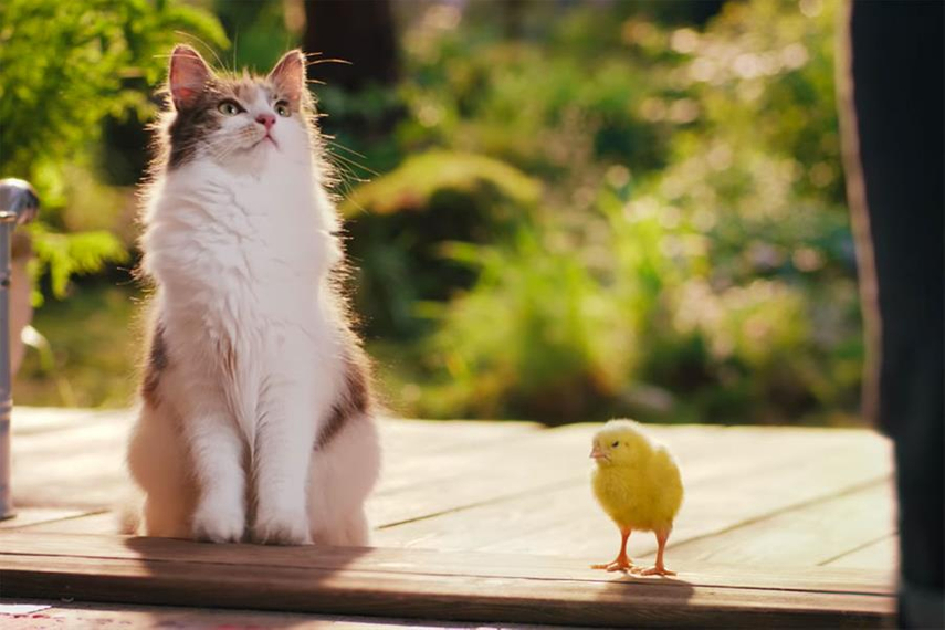 From the UK: 'Best friends' for Dreamies Deli-Catz treats (Mars) by Adam & Eve DDB.