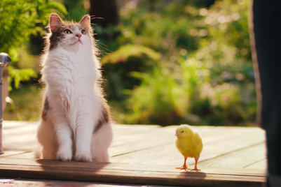 Would you believe a cat and a little bird are besties?