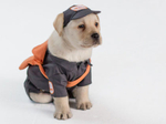 Puppy mail carriers to deliver greetings in Hallmark campaign