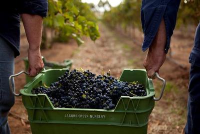 Pernod Ricard Winemakers pick AnalogFolk Australia for global account