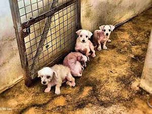 Campaign seeks to intercept, educate potential puppy buyers
