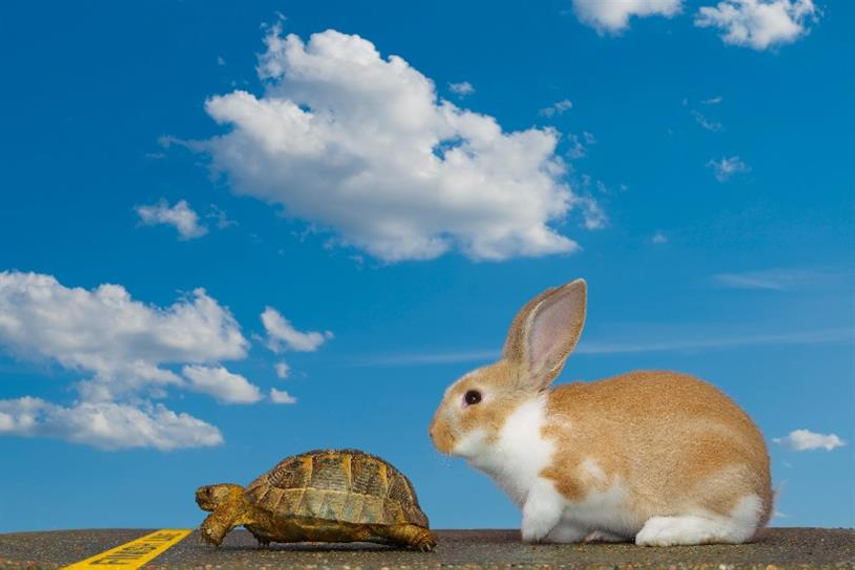 Slow and steady wins the marketing race, says LinkedIn