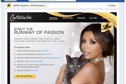 Sheba asks pet owners to create Facebook cat pages