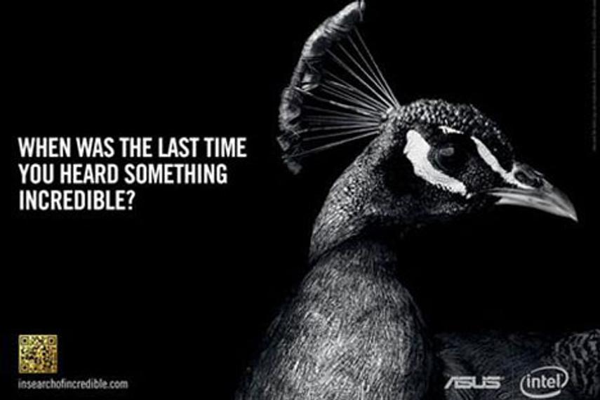 Asus: seeking