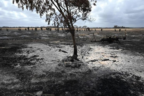 Anomaly 'fires' Aussie staff to help devastation Down Under