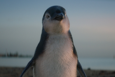 Plucky penguin plots path to professional pinnacle