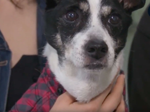 Clinic chain uses furry-friend stories to build brand