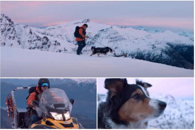 The most gorgeous ad for dog food you'll ever see