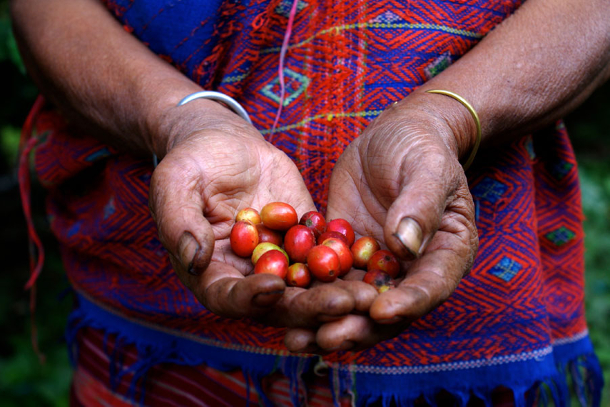 Fair trade: Coffee brands have recognised the marketable value of ethical sourcing policies, and clearly labelling that to consumers.