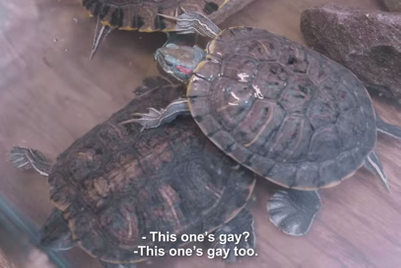 'Gay' turtles push Turkey to confront homophobia