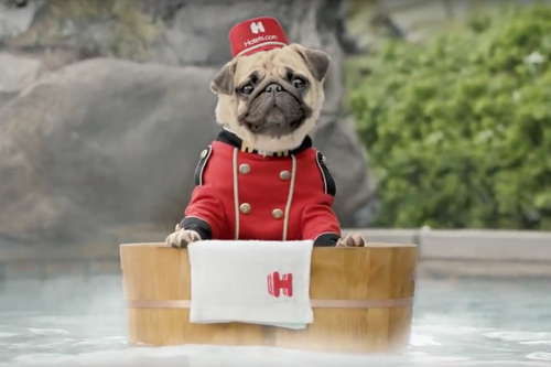 The pug stays in the picture in new Hotels.com campaign