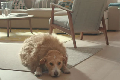 There's a reason the dog in this Ikea ad is so overweight