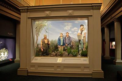 'Endangered' retirees populate live diorama at Australian Museum