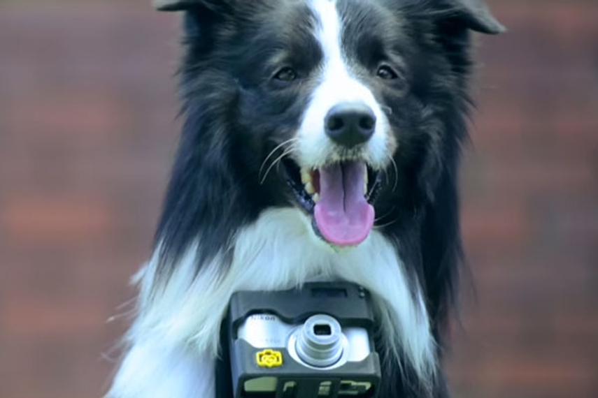 ASIA-PACIFIC - Nikon Asia worked with J. Walter Thompson Singapore to produce an online film showcasing a canine with a camera. But does the doggy deliver the right message?
