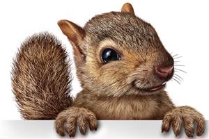 Ad Nut