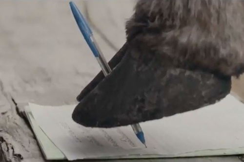 This buffalo's letter may bring a tear to your eye