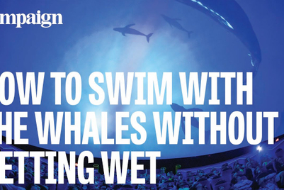 How to swim with the whales without getting wet: Experience stories