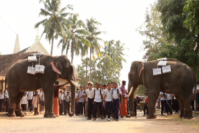 Elephants, boatmen and kalari warriors deliver TOI newspapers in Kerala