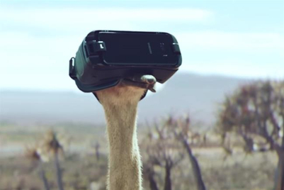 Partner Content: How an international collaboration helped launch a flightless bird