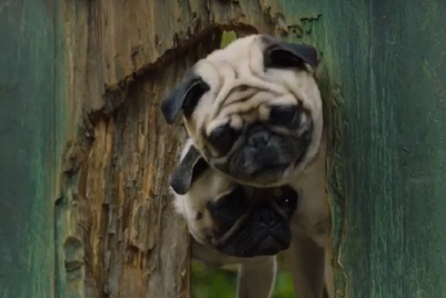 PETA responds to Vodafone Pug row