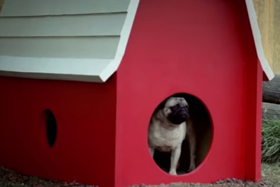 Vodafone brings back its pug to extend stay home, stay safe message