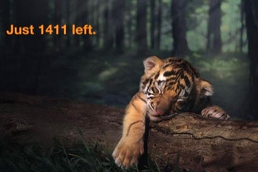 Aircel | 拯救我们的老虎 | 印度