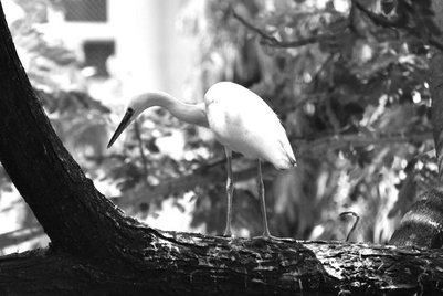 Blog: The bird masterclass