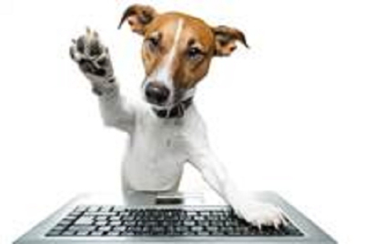 A CNY resolution for agencies: Be more like dogs