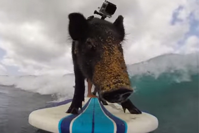 Red Bull buys equity in GoPro amid global content deal
