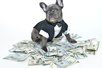 Year of the Dog: what's in store for corporate treasurers