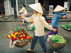 Vietnamese firms scramble for dollars