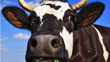 Fonterra looks for right formula with Beingmate