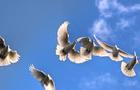 Shinhan bond flies behind FOMC doves