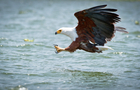 Singapore Reits: US eagles are landing
