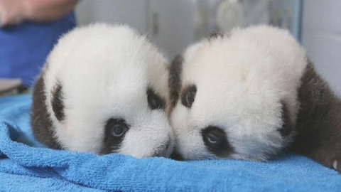 Bank of China (HK) and HSBC breed new Pandas
