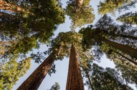 Sequoia nabs Deutsche TMT banker