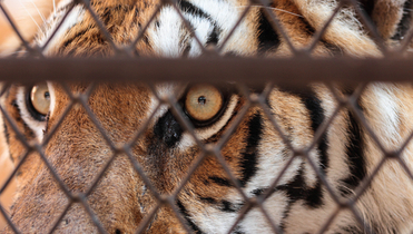 Tiger hunt: Who's snared in China's graft fight?