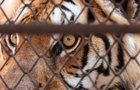 Tiger hunt: Who's been snared in China's graft fight?