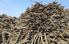 Everbright Int'l launches biomass unit IPO