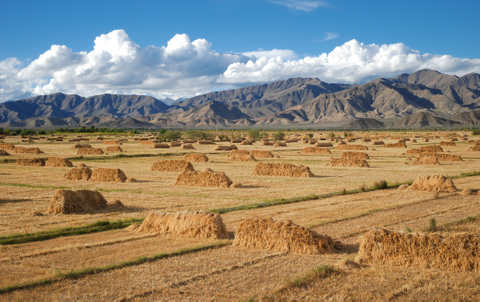 China Agri-Industries plans rights issue