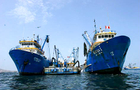 China Fishery bids $566 million for Peru's Copeinca